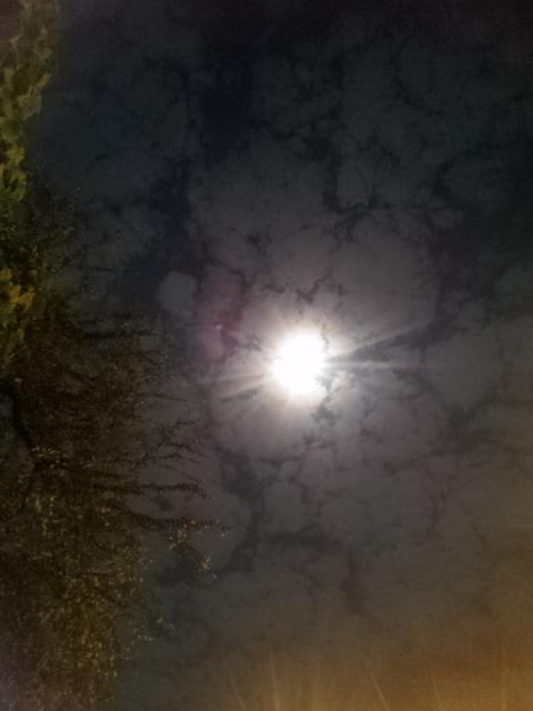 Healing moonlight
